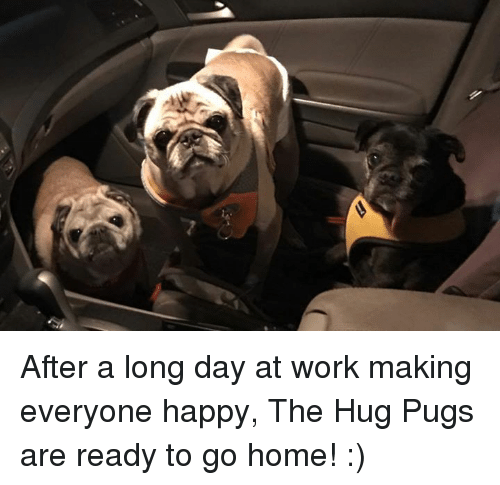 Memes, 🤖, and Working: After a long day at work making everyone happy, The Hug Pugs are ready to go home! :)