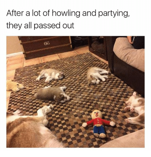 Funny, All, and They: After a lot of howling and partying,  they all passed out