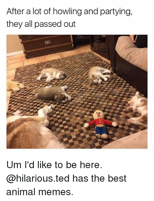 Memes, Ted, and Animal: After a lot of howling and partying,  they all passed out Um I'd like to be here. @hilarious.ted has the best animal memes.