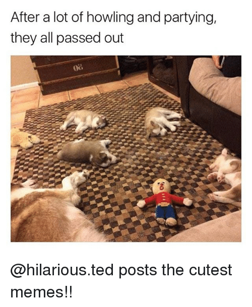 Memes, Ted, and Hilarious: After a lot of howling and partying,  they all passed out @hilarious.ted posts the cutest memes!!