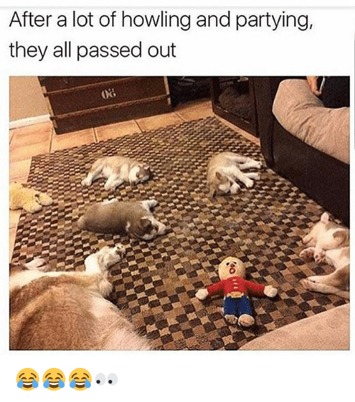 Funny, All, and They: After a lot of howling and partying,  they all passed out 😂😂😂👀