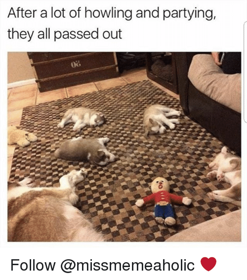 Memes, 🤖, and All: After a lot of howling and partying,  they all passed out Follow @missmemeaholic ❤
