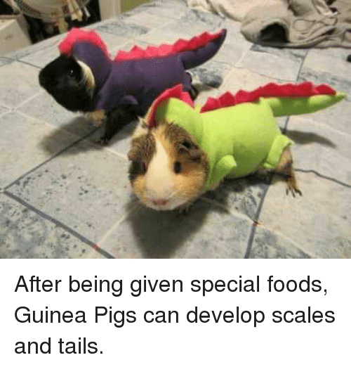 Pigly: After being given special foods, Guinea Pigs can develop scales and tails.