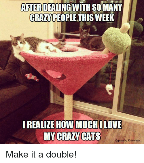 crazy cats: AFTER  DEALING WITH SOIMANY  CRANPEOPLE THISWEEK  I REALIZE HOW MUCH ILOVE  MY CRAZY CATS  Caption by Kittyworks Make it a double!