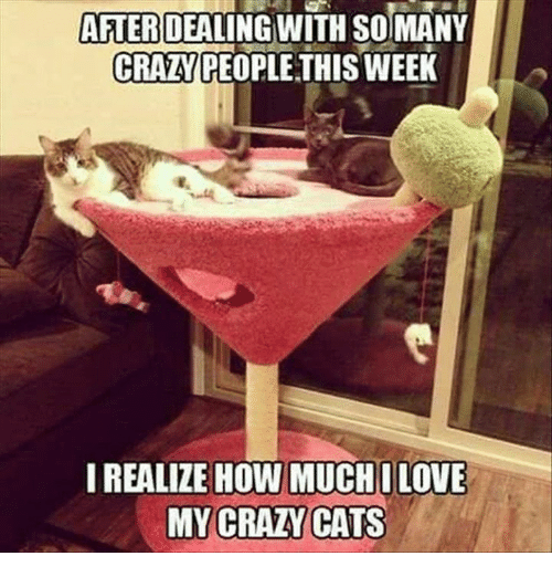 crazy cats: AFTER  DEALING WITH SOIMANY  CRAZY PEOPLE THIS WEEK  I REALIZE HOW MUCHILOVE  MY CRAZY CATS