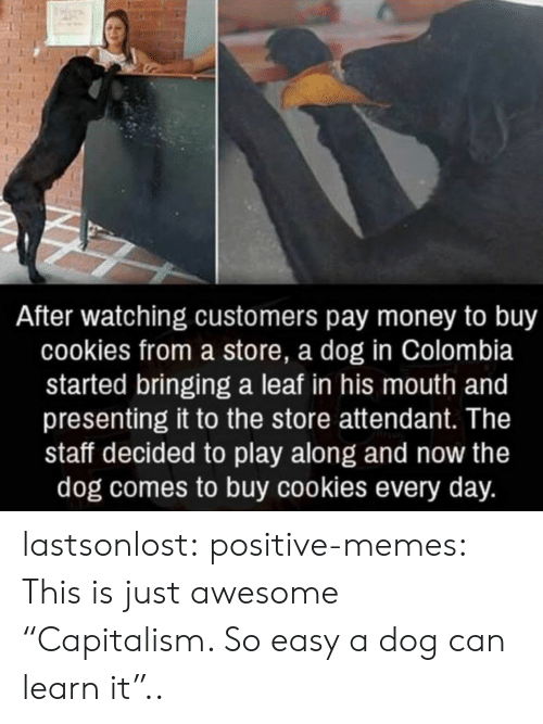 """A Leaf: After watching customers pay money to buy  cookies from a store, a dog in Colombia  started bringing a leaf in his mouth and  presenting it to the store attendant. The  staff decided to play along and now the  dog comes to buy cookies every day. lastsonlost:  positive-memes:  This is just awesome  """"Capitalism. So easy a dog can learn it"""".."""