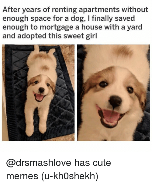 Cute, Funny, and Memes: After years of renting apartments without  enough space for a dog, I finally saved  enough to mortgage a house with a yard  and adopted this sweet girl @drsmashlove has cute memes (u-kh0shekh)