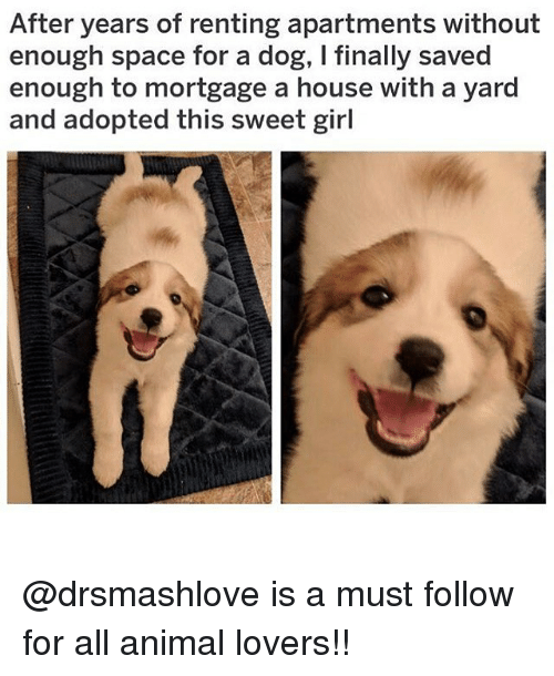 Memes, Animal, and Girl: After years of renting apartments without  enough space for a dog, I finally saved  enough to mortgage a house with a yard  and adopted this sweet girl @drsmashlove is a must follow for all animal lovers!!
