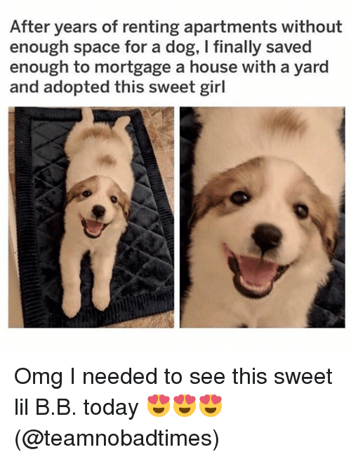 Lil B, Memes, and Omg: After years of renting apartments without  enough space for a dog, I finally saved  enough to mortgage a house with a yard  and adopted this sweet girl Omg I needed to see this sweet lil B.B. today 😍😍😍(@teamnobadtimes)