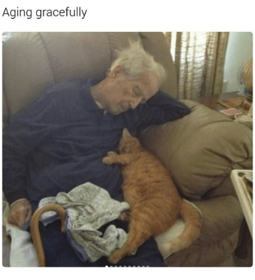 aging gracefully grumpy cat meme on sizzle