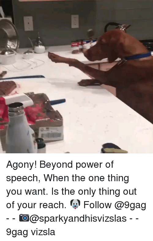 9gag, Memes, and Power: Agony! Beyond power of speech, When the one thing you want. Is the only thing out of your reach. 🐶 Follow @9gag - - 📷@sparkyandhisvizslas - - 9gag vizsla