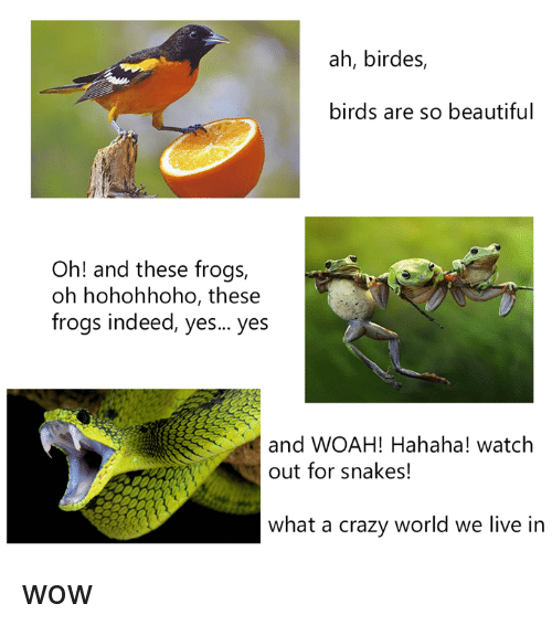 Crazyness: ah, birdes,  birds are so beautiful  Oh! and these frogs,  oh hohohhoho, these  frogs indeed, yes... yes  and WOAH! Hahaha! watch  out for snakes!  what a crazy world we live in wow