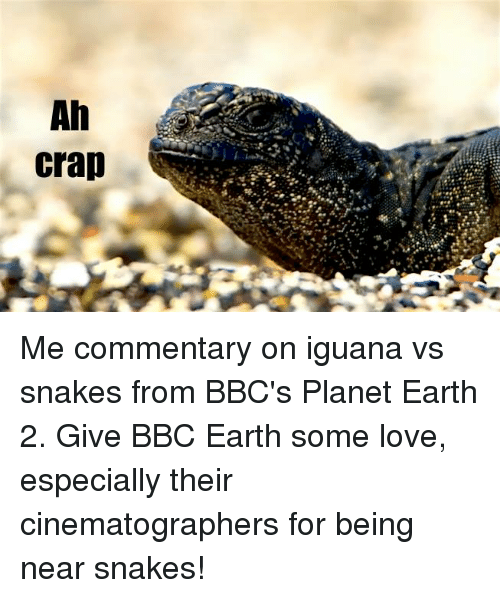 cinematographer: Ah  crap Me commentary on iguana vs snakes from BBC's Planet Earth 2. Give BBC Earth some love, especially their cinematographers for being near snakes!
