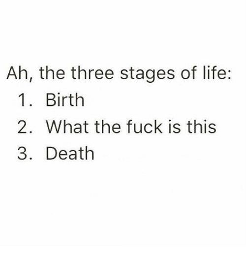 Memes, 🤖, and Deaths: Ah, the three stages of life:  1 Birth  2. What the fuck is this  3. Death