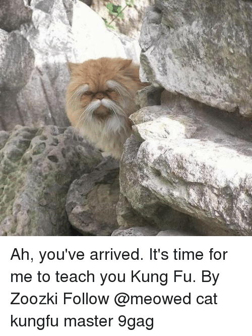 9gag, Memes, and Time: Ah, you've arrived. It's time for me to teach you Kung Fu. By Zoozki Follow @meowed cat kungfu master 9gag