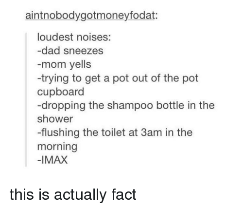sneezes: aintnobodygotmoneyfodat:  loudest noises:  -dad sneezes  -mom yells  -trying to get a pot out of the pot  cupboard  -dropping the shampoo bottle in the  shower  -flushing the toilet at 3am in the  morning  -IMAX this is actually fact
