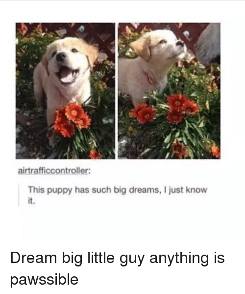 dream big: airtrafficcontroller:  This puppy has such big dreams, I just know  it. <p>Dream big little guy anything is pawssible</p>
