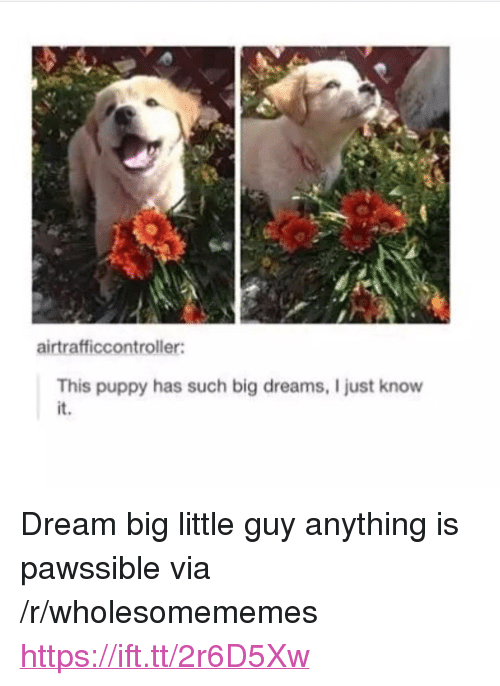 """dream big: airtrafficcontroller:  This puppy has such big dreams, I just know  it. <p>Dream big little guy anything is pawssible via /r/wholesomememes <a href=""""https://ift.tt/2r6D5Xw"""">https://ift.tt/2r6D5Xw</a></p>"""