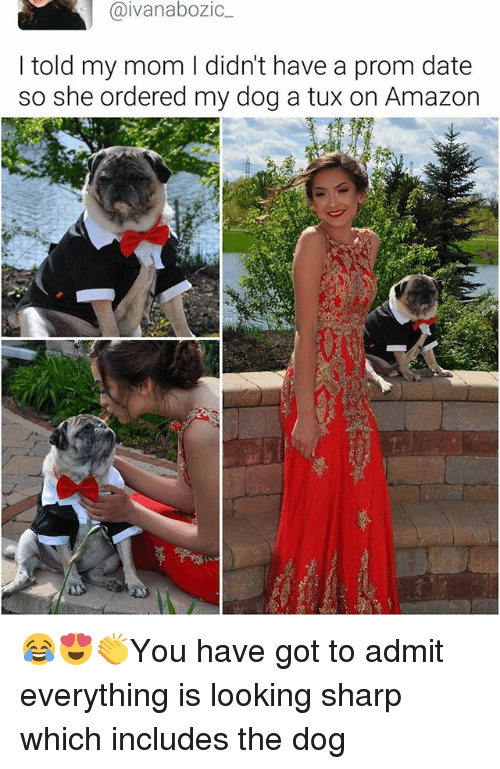 dates: aivanabozic  I told my mom I didn't have a prom date  so she ordered my dog a tux on Amazon 😂😍👏You have got to admit everything is looking sharp which includes the dog