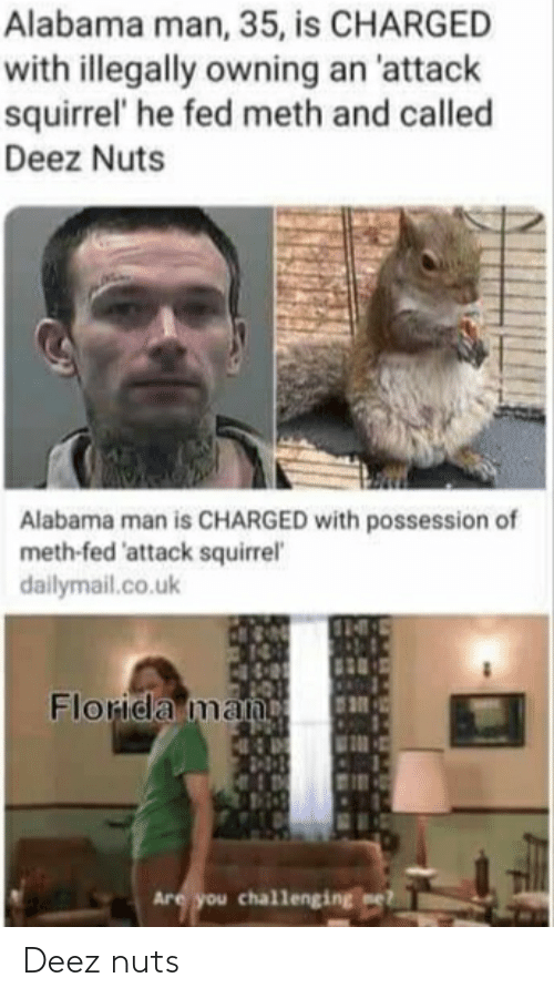 dailymail.co.uk: Alabama man, 35, is CHARGED  with illegally owning an 'attack  squirrel' he fed meth and called  Deez Nuts  Alabama man is CHARGED with possession of  meth-fed 'attack squirrel  dailymail.co.uk  Florida man  Are you challenging mel Deez nuts