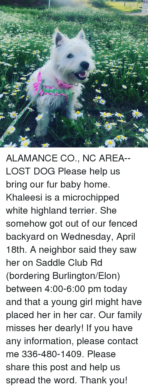 Club, Family, and Memes: ALAMANCE CO., NC AREA-- LOST DOG  Please help us bring our fur baby home. Khaleesi is a microchipped white highland terrier. She somehow got out of our fenced backyard on Wednesday, April 18th. A neighbor said they saw her on Saddle Club Rd (bordering Burlington/Elon) between 4:00-6:00 pm today and that a young girl might have placed her in her car. Our family misses her dearly! If you have any information, please contact me 336-480-1409. Please share this post and help us spread the word. Thank you!