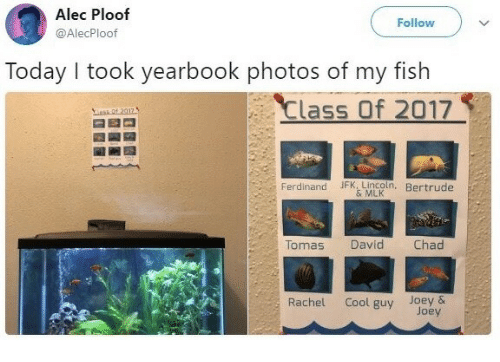 Cool, Fish, and Lincoln: Alec Ploof  @AlecPloof  Follow  Today I took yearbook photos of my fish  Class Of 2017  Ferdinand JFK. LIncoln, Bertrude  & MLK  Tomas  David  Chad  Rachel Cool guy Joey &