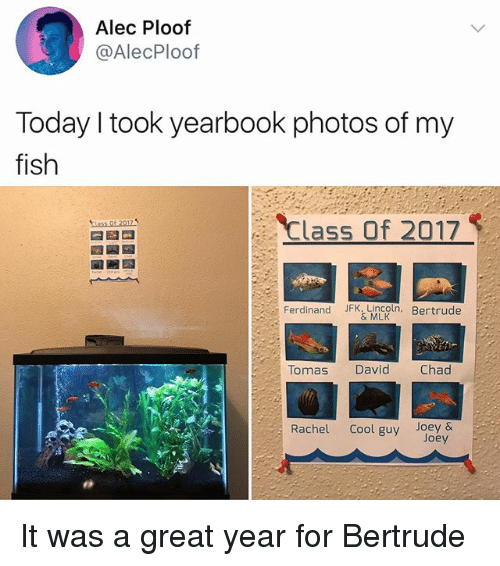 Yearbooks: Alec Ploof  @AlecPloof  Today I took yearbook photos of my  fish  Class Of 2017  Ferdinand JFK, Lincoln. Bertrude  & MLK  Tomas David Chad  Rachel Cool guy Joey &  Joey It was a great year for Bertrude