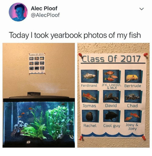 Cool, Fish, and Lincoln: Alec Ploof  @AlecPloof  Today I took yearbook photos of my fish  Class of 2017  Ferdinand JFK, Lincoln. Bertrude  & MLK  Tomas David Chad  Rachel Cool guy Joey&  Joey