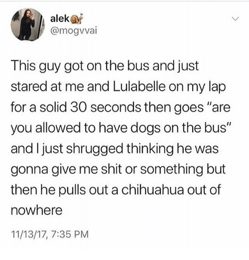 "Chihuahua, Dogs, and Ironic: alek@  @mogvvai  This guy got on the bus and just  stared at me and Lulabelle on my lap  for a solid 30 seconds then goes ""are  you allowed to have dogs on the bus""  and I just shrugged thinking he was  gonna give me shit or something but  then he pulls out a chihuahua out of  nowhere  11/13/17, 7:35 PM"