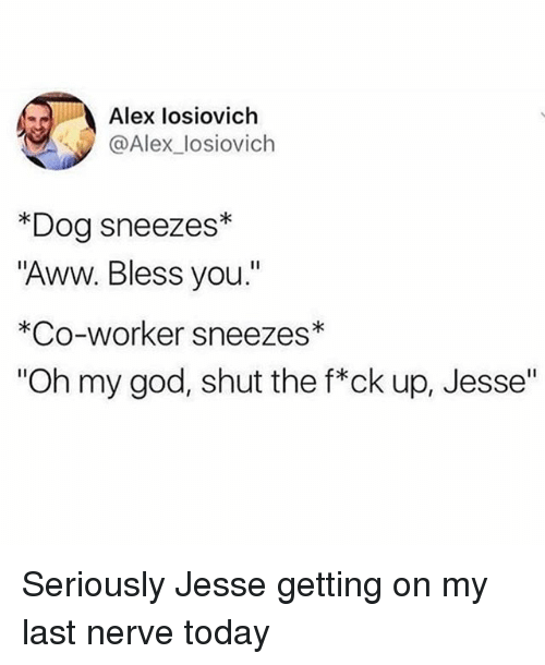 """Aww, God, and Memes: Alex losiovich  @Alex_losiovich  *Dog sneezes*  """"Aww. Bless you.""""  *Co-worker sneezes  """"Oh my god, shut the f*ck up, Jesse"""" Seriously Jesse getting on my last nerve today"""