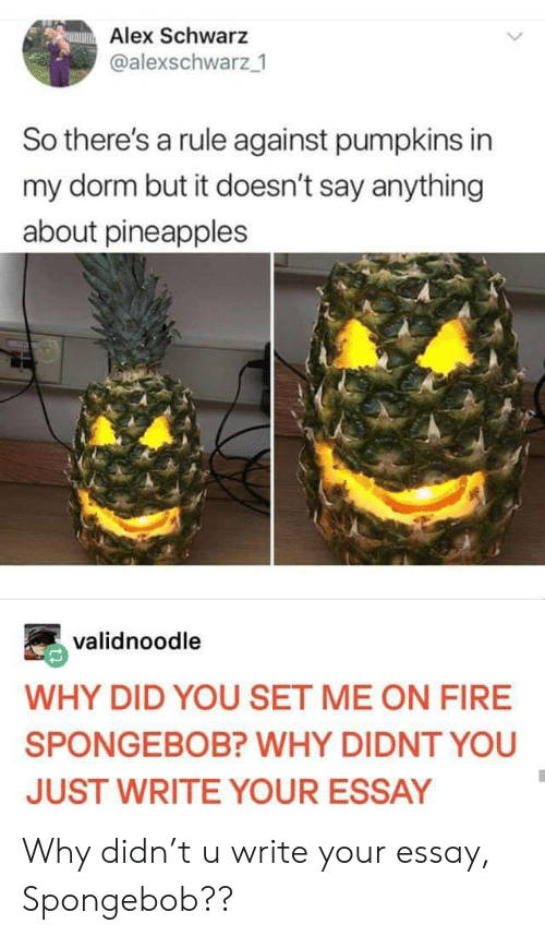 dorm: Alex Schwarz  @alexschwarz 1  So there's a rule against pumpkins in  my dorm but it doesn't say anything  about pineapples  validnoodle  WHY DID YOU SET ME ON FIRE  SPONGEBOB? WHY DIDNT YOU  JUST WRITE YOUR ESSAY Why didn't u write your essay, Spongebob??