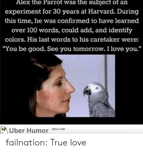 """see you tomorrow: Alex the Parrot was the subject of an  experiment for 30 years at Harvard. During  this time, he was confirmed to have learned  over 100 words, could add, and identify  colors. His last words to his caretaker were:  """"You be good. See you tomorrow. I love you.'""""  Uber Humor Steve holt failnation:  True love"""