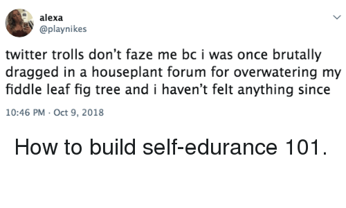 Dragged: alexa  @playnikes  twitter trolls don't faze me bc i was once brutally  dragged in a houseplant forum for overwatering my  fiddle leaf fig tree and i haven't felt anything since  10:46 PM Oct 9, 2018 How to build self-edurance 101.