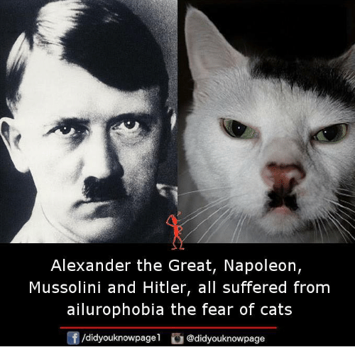 Hitlerism: Alexander the Great, Napoleon,  Mussolini and Hitler, all suffered from  ailurophobia the fear of cats  /didyouknowpagel