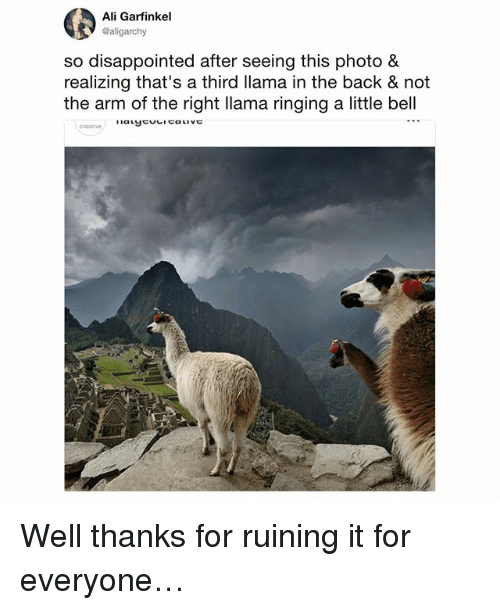 Ali, Disappointed, and Memes: Ali Garfinkel  @aligarchy  so disappointed after seeing this photo &  realizing that's a third llama in the back & not  the arm of the right llama ringing a little bell Well thanks for ruining it for everyone…