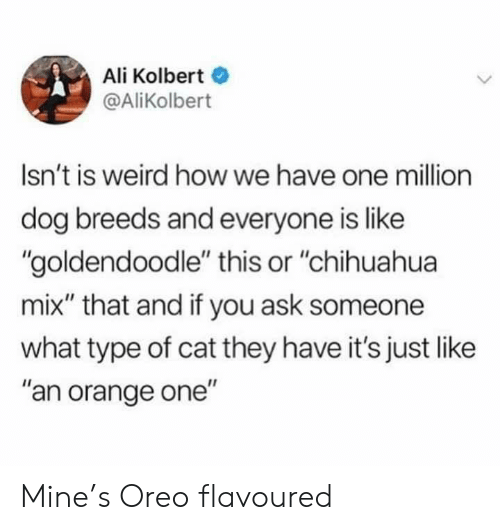 "Ali: Ali Kolbert  @AliKolbert  Isn't is weird how we have one million  dog breeds and everyone is like  ""goldendoodle"" this or ""chihuahua  mix"" that and if you ask someone  what type of cat they have it's just like  ""an orange one"" Mine's Oreo flavoured"