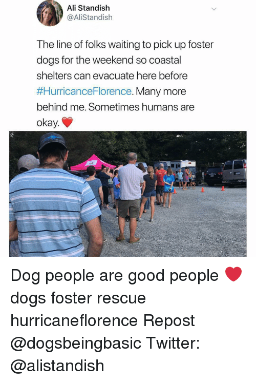 Ali, Dogs, and Memes: Ali Standish  @AliStandish  The line of folks waiting to pick up foster  dogs for the weekend so coastal  shelters can evacuate nere before  #HurricanceFlorence. Many more  behind me. Sometimes humans are  okay. Dog people are good people ❤️ dogs foster rescue hurricaneflorence Repost @dogsbeingbasic Twitter: @alistandish