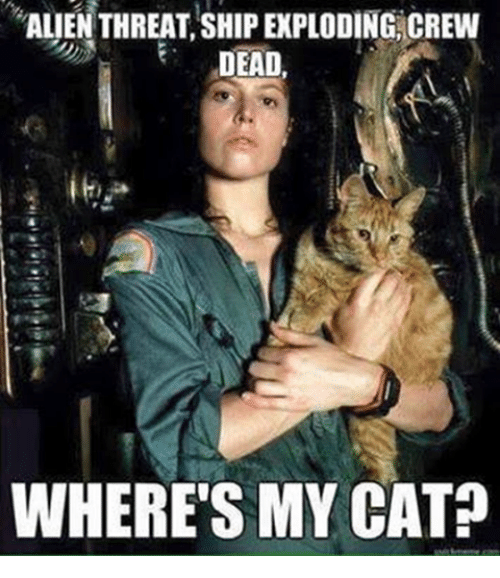 Alien, Cat, and Crew: ALIEN THREAT,SHIP EXPLODING CREW  DEAD,  WHERE'S MY CAT?