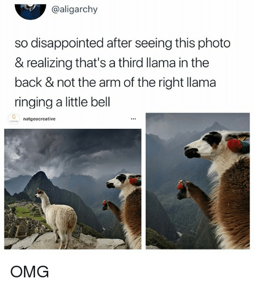 Disappointed, Omg, and Relatable: @aligarchy  so disappointed after seeing this photo  & realizing that's a third llama in the  back & not the arm of the right llama  ringing a little bell  natgeocreative OMG