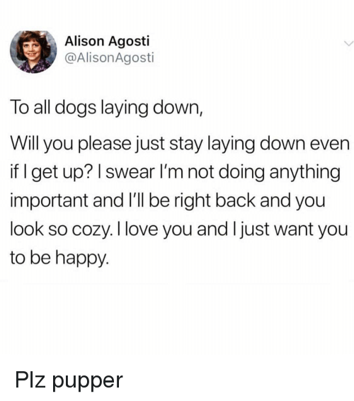 laying down: Alison Agosti  @AlisonAgosti  To all dogs laying down,  Will you please just stay laying down even  if I get up? I swear l'm not doing anything  important and l'll be right back and you  look so cozy. I love you and Ijust want you  to be happy Plz pupper