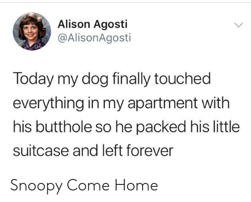 Snoopy: Alison Agosti  @AlisonAgosti  Today my dog finally touched  everything in my apartment with  his butthole so he packed his little  suitcase and left forever Snoopy Come Home