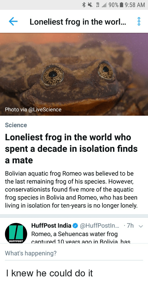 """Frog Species: . """" """"all 90%  9:58 AM  <  Loneliest frog in the worl...。  Photo via@LiveScience  Science  Loneliest frog in the world who  spent a decade in isolation finds  a mate  Bolivian aquatic frog Romeo was believed to be  the last remaining frog of his species. However,  conservationists found five more of the aquatic  frog species in Bolivia and Romeo, who has been  living in isolation for ten-years is no longer lonely.  HuffPost India Φ @HuffPostin...-7h  Romeo, a Sehuencas water frog  cantured 10 vears ano in Rolivia has  HUFFPoST  What's happening?"""