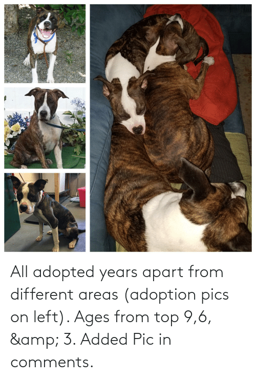 Apart: All adopted years apart from different areas (adoption pics on left). Ages from top 9,6, & 3. Added Pic in comments.