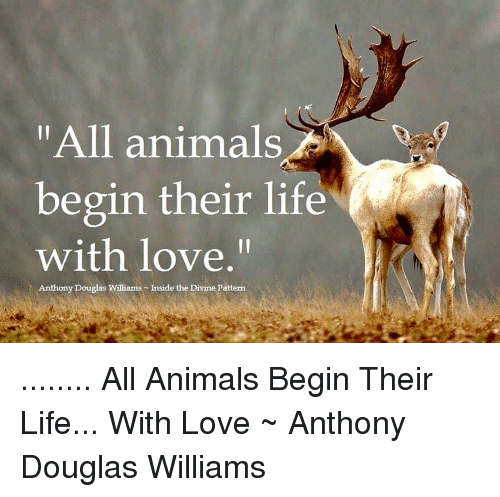 """Animals, Life, and Love: """"All animals  begin their life  with love.""""  Anthony Douglas Williams Inside the Divine Pattern ........ All Animals Begin Their Life... With Love ~ Anthony Douglas Williams"""