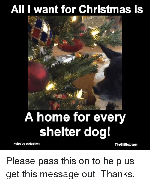 dog videos: All I want for Christmas is  A home for every  shelter dog!  video by scdashkon  TheGlftBox com Please pass this on to help us get this message out! Thanks.