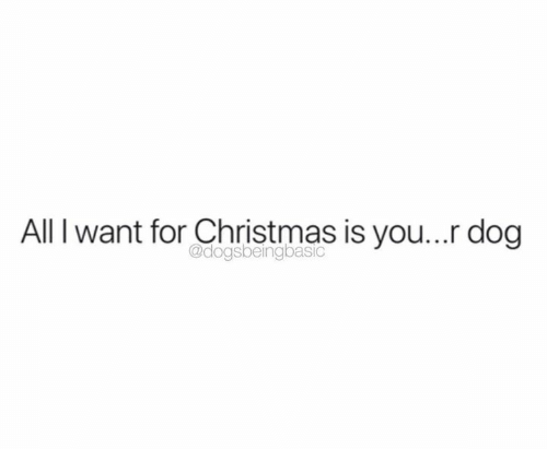 All I Want for Christmas is You: All I want for Christmas is you... dog  @dogsbeingbasic