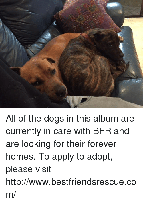 Memes and 🤖: All of the dogs in this album are currently in care with BFR and are looking for their forever homes. To apply to adopt, please visit http://www.bestfriendsrescue.com/