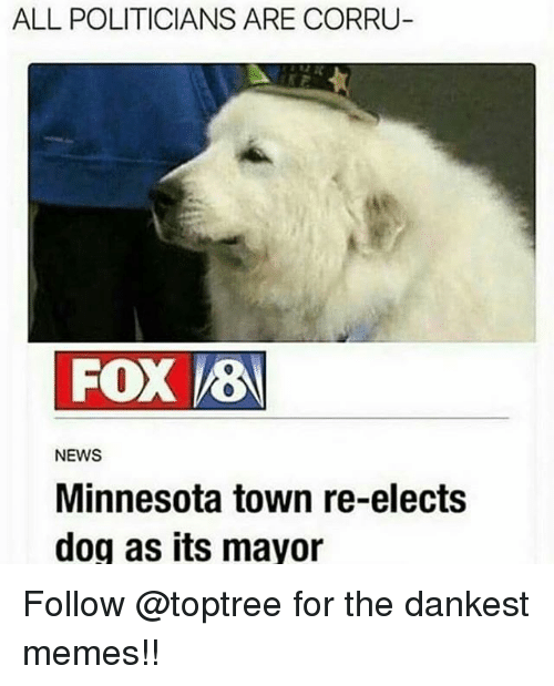 Memes, News, and Minnesota: ALL POLITICIANS ARE CORRU  FOX 8  NEWS  Minnesota town re-elects  dog as its mayor Follow @toptree for the dankest memes!!