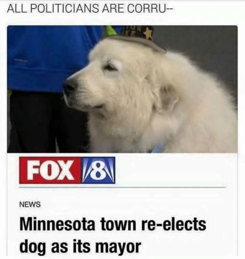 mayor: ALL POLITICIANS ARE CORRU  FOX 8  NEWS  Minnesota town re-elects  dog as its mayor