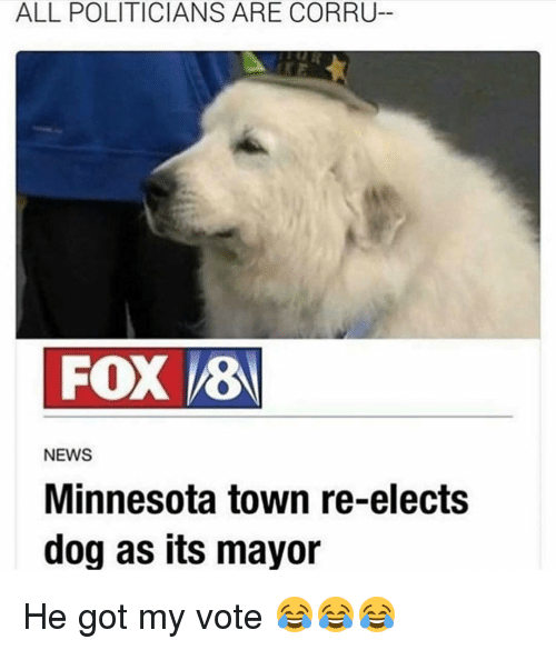 Dogs, Funny, and News: ALL POLITICIANS ARE CORRU  FOX  NEWS  Minnesota town re-elects  dog as its mayor He got my vote 😂😂😂